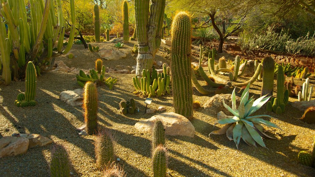 Desert Botanical Garden featuring desert views, landscape views and a garden