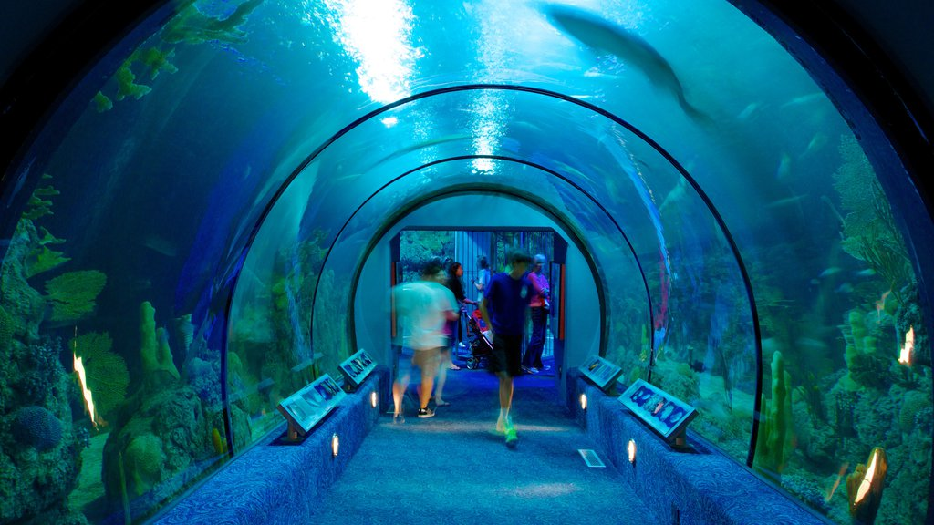 Moody Gardens showing marine life, colorful reefs and interior views