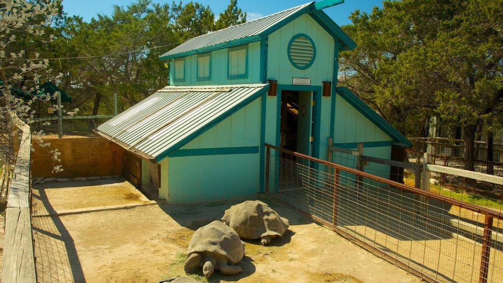 Zoológico de Austin mostrando animales del zoológico