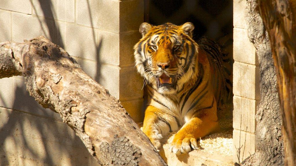Zoológico de Austin mostrando animales del zoológico y animales peligrosos
