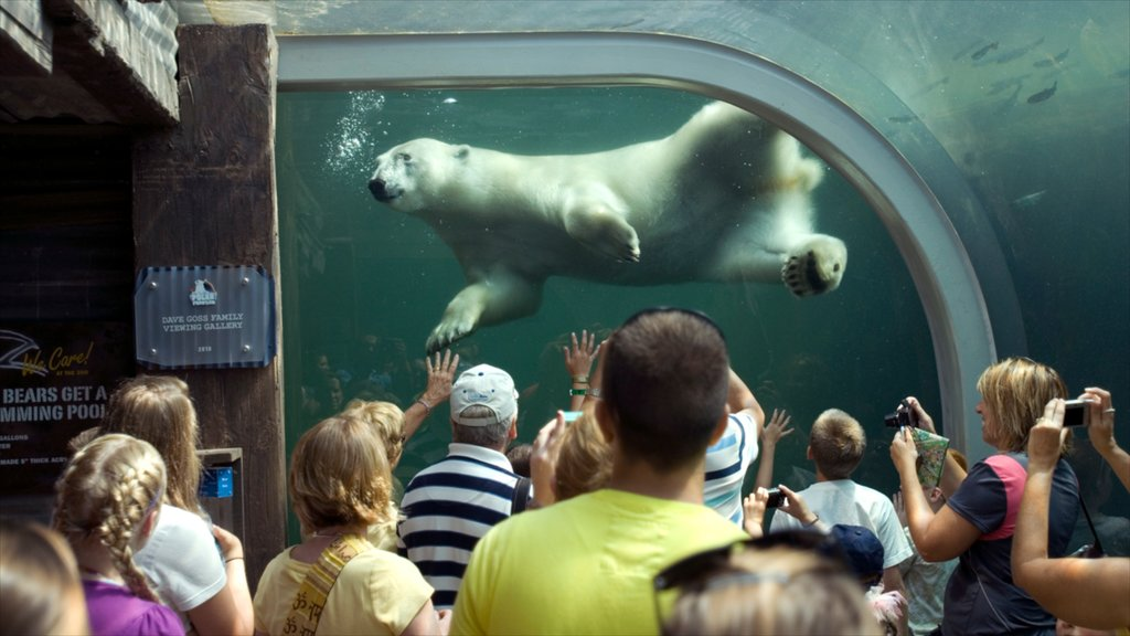Columbus which includes zoo animals, land animals and marine life