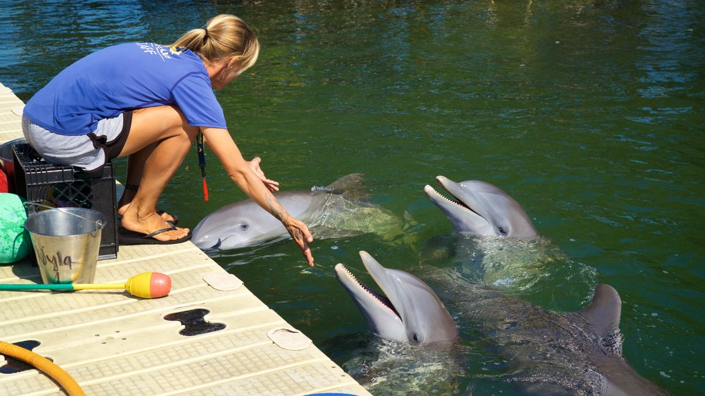 Dolphins Plus which includes marine life as well as an individual femail