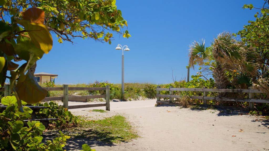 Hollywood North Beach Park mostrando uma praia de areia