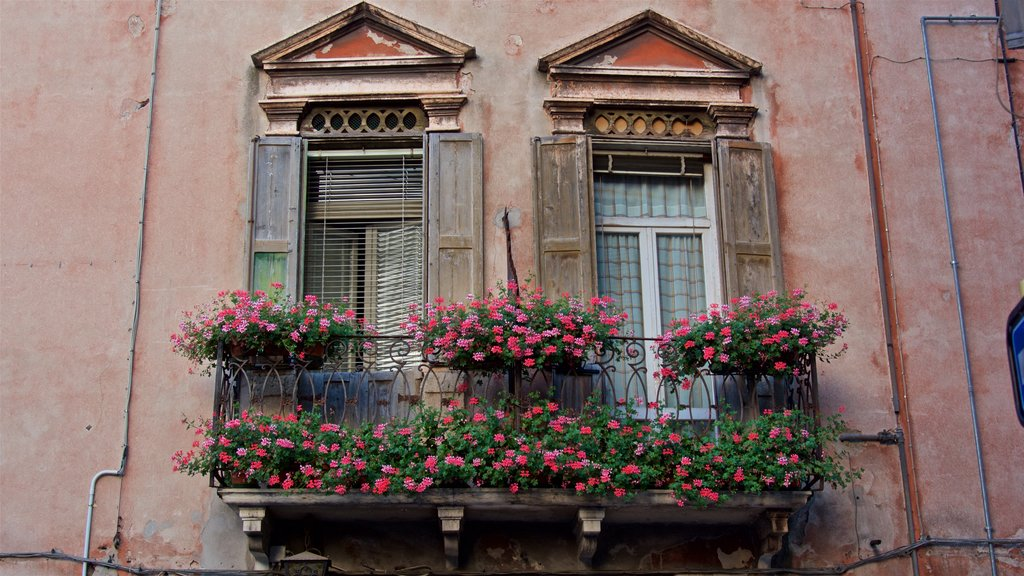 Verona which includes flowers