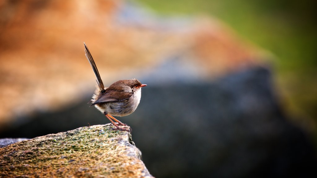 Tasman Peninsula which includes bird life