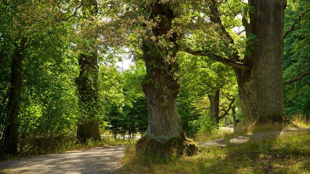 Djurgarden mostrando escenas forestales y un parque