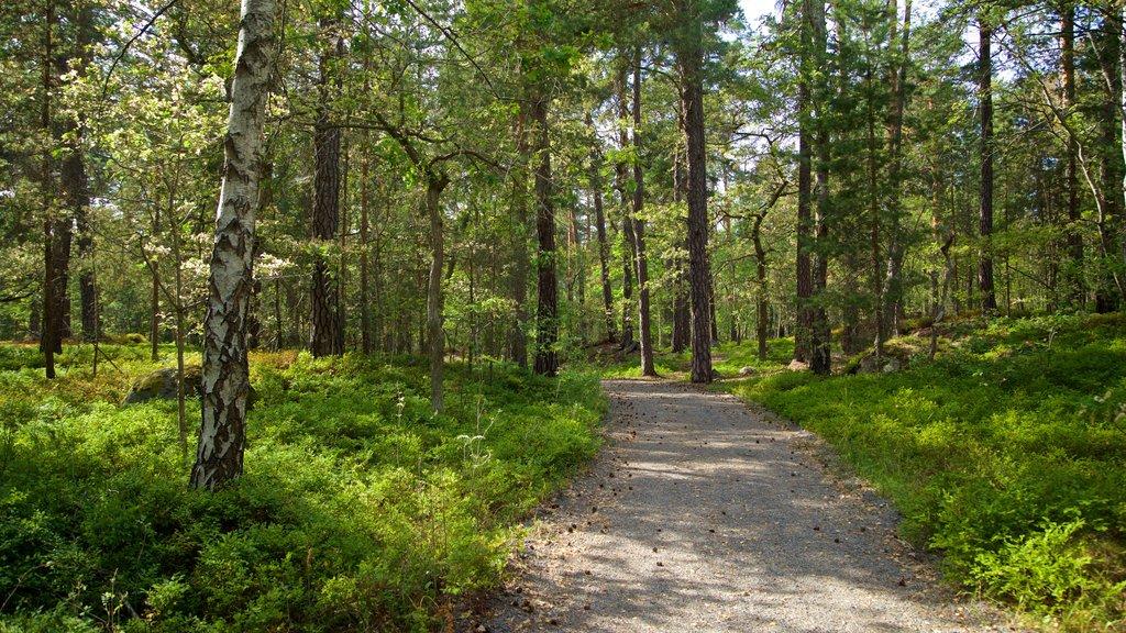 Djurgarden que incluye un parque y escenas forestales
