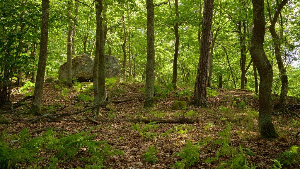 Djurgarden que incluye escenas forestales y un parque