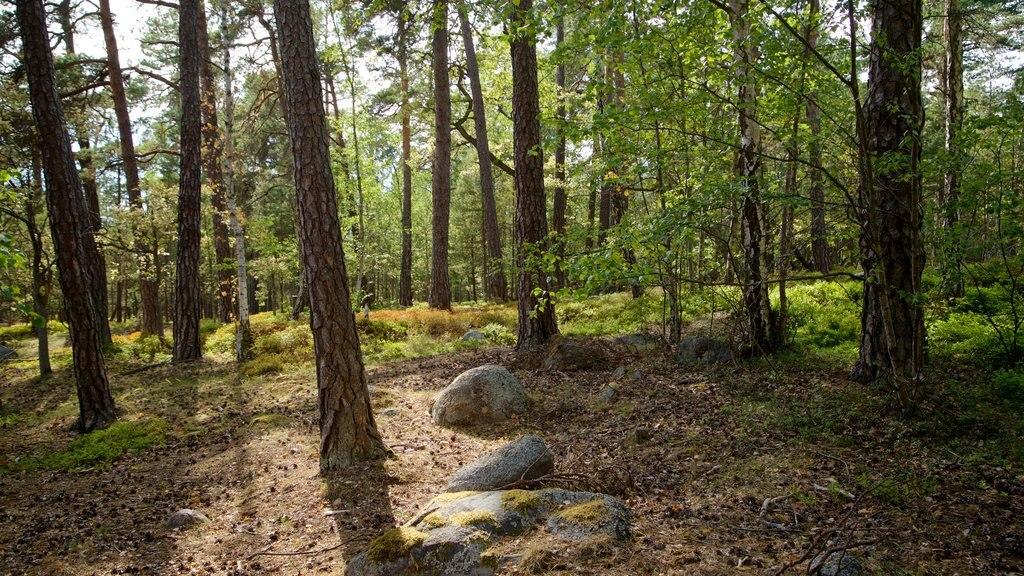 Djurgarden mostrando bosques y un jardín