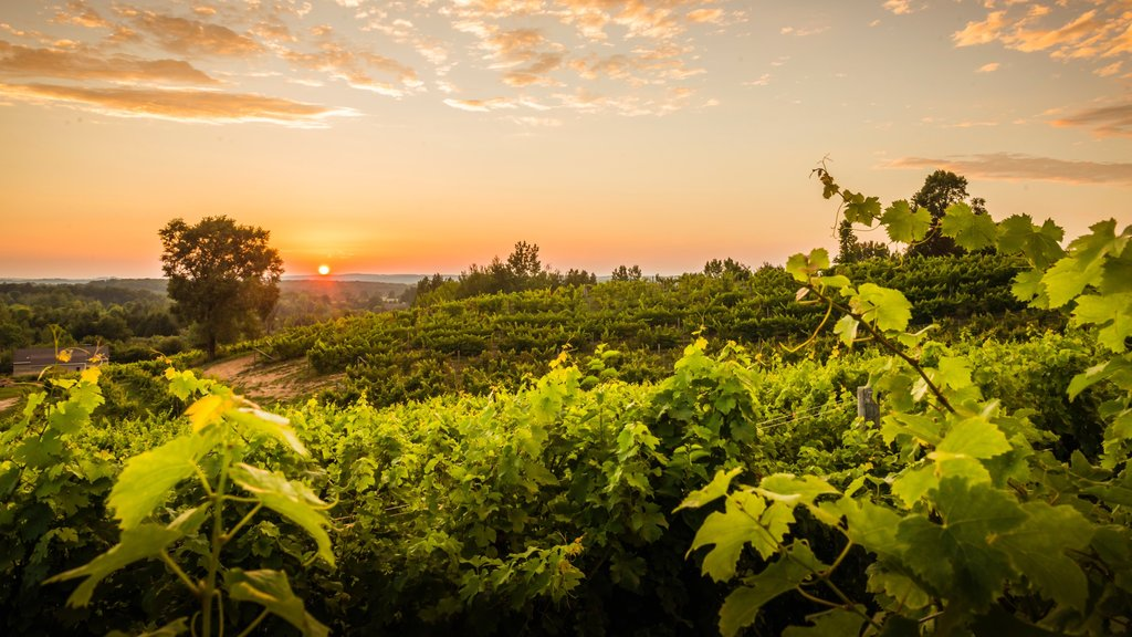 Traverse City showing landscape views, farmland and a sunset