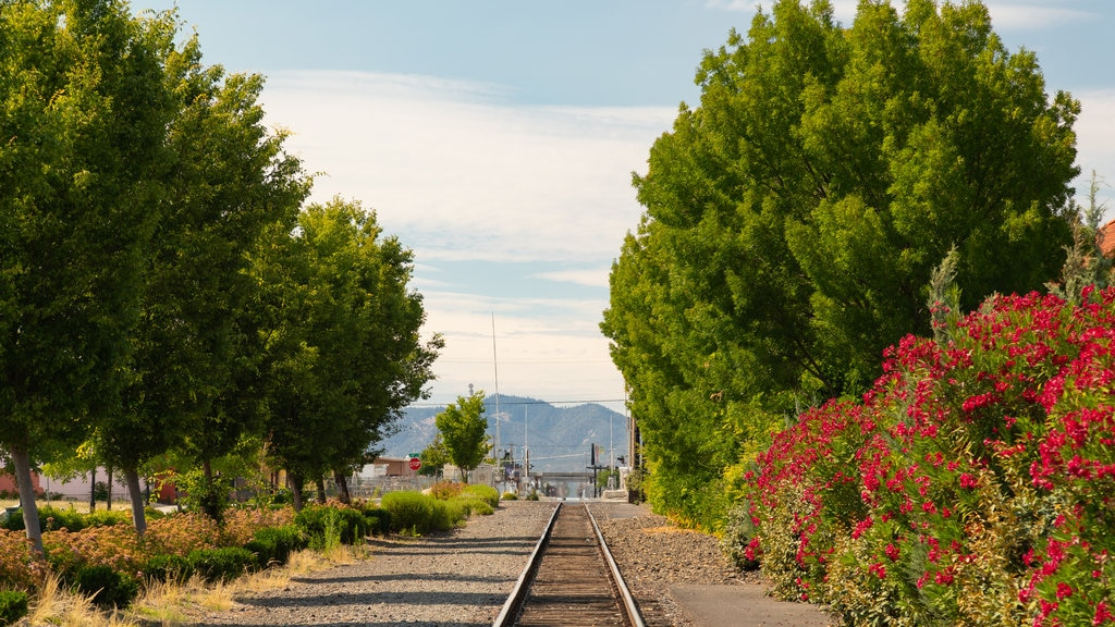 Medford showing wildflowers and railway items