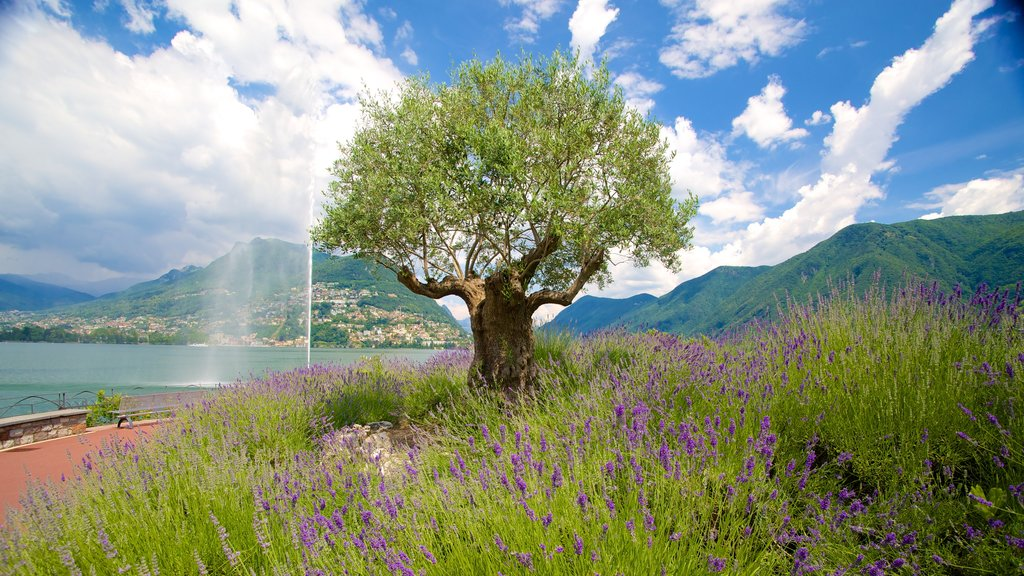 Lugano which includes wildflowers and a lake or waterhole