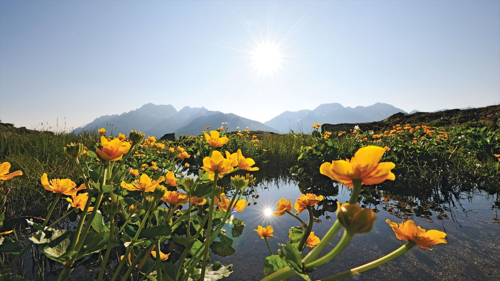 Andermatt featuring wildflowers, a pond and a sunset