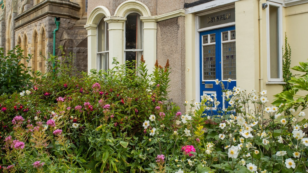 Llandudno Museum which includes wildflowers and a park