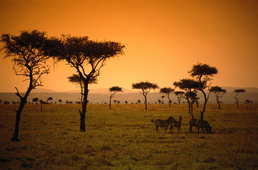 Kenya, savana al tramonto - 10 safari in Africa da fare una volta nella vita - Photo credit Getty Images