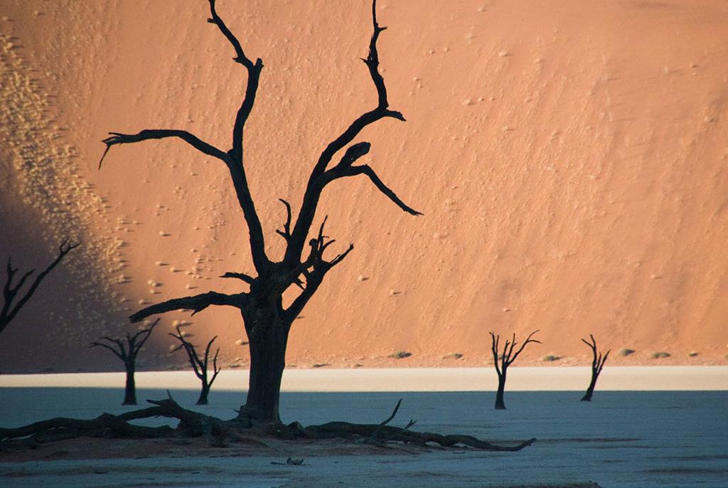 La Dead Vlei in Namibia - 10 viaggi on the road da fare almeno una volta nella vita