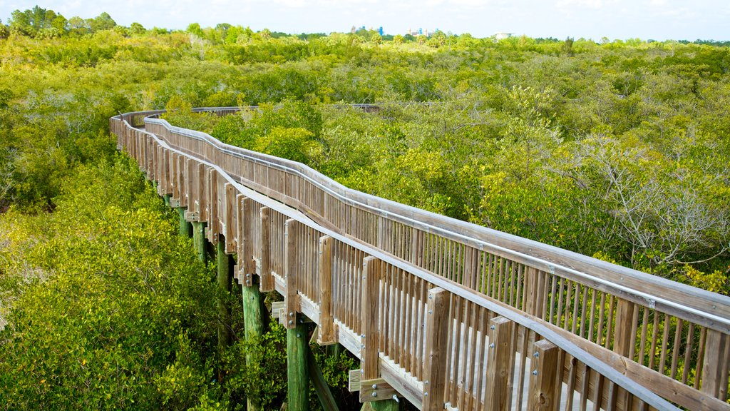 Weedon Island Preserve showing forests and a bridge