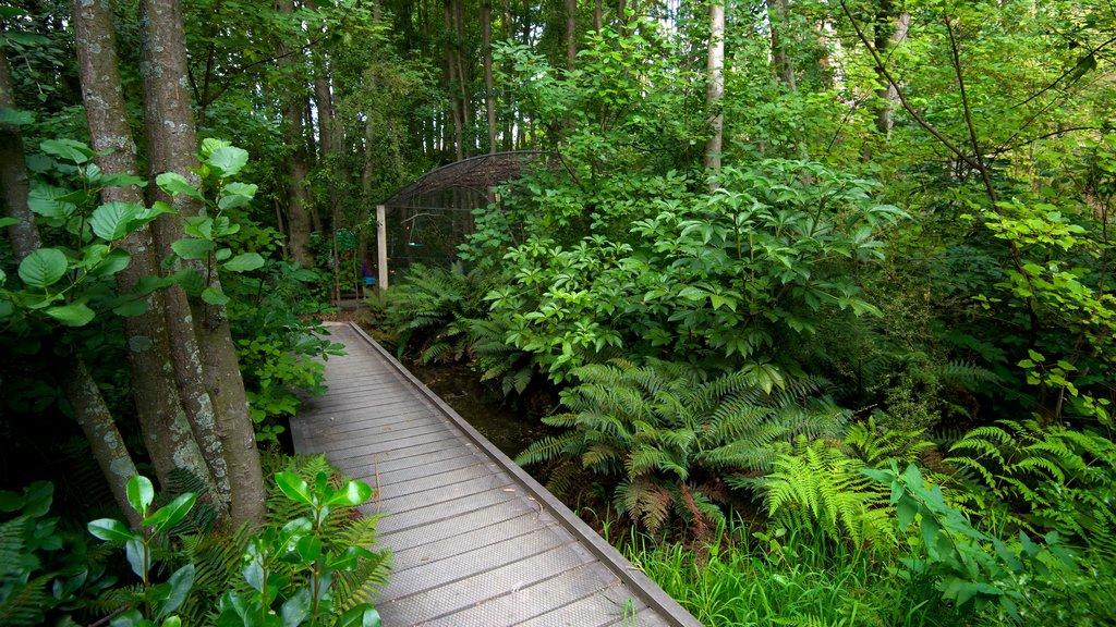 Parque Kiwi and Birdlife mostrando escenas forestales, un jardín y un puente