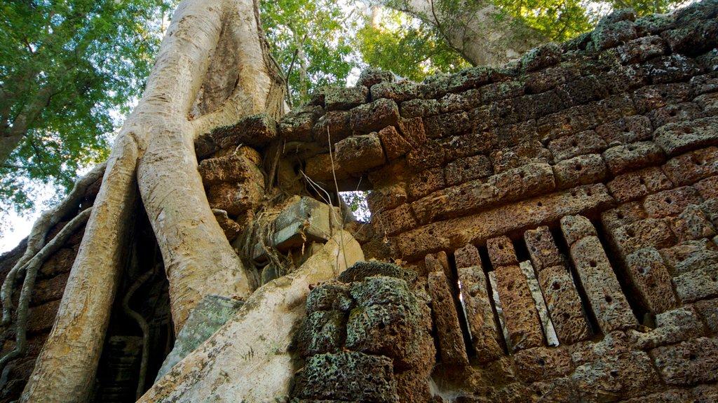 Templo Ta Prohm que incluye un templo o lugar de culto y aspectos religiosos