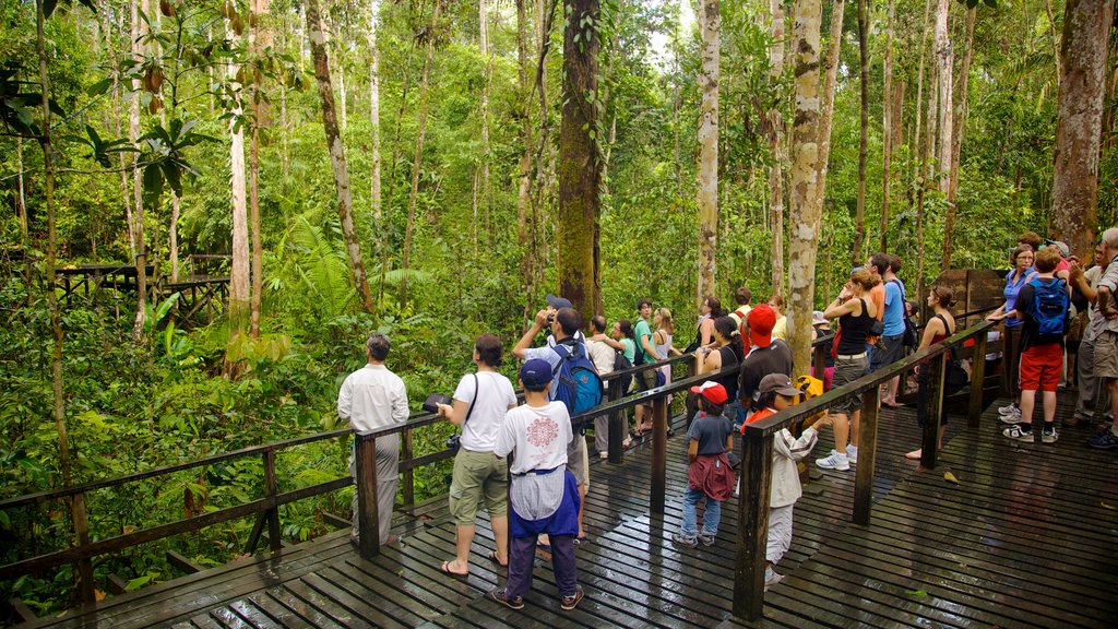 Semenggoh Wildlife Centre showing a garden, hiking or walking and forest scenes
