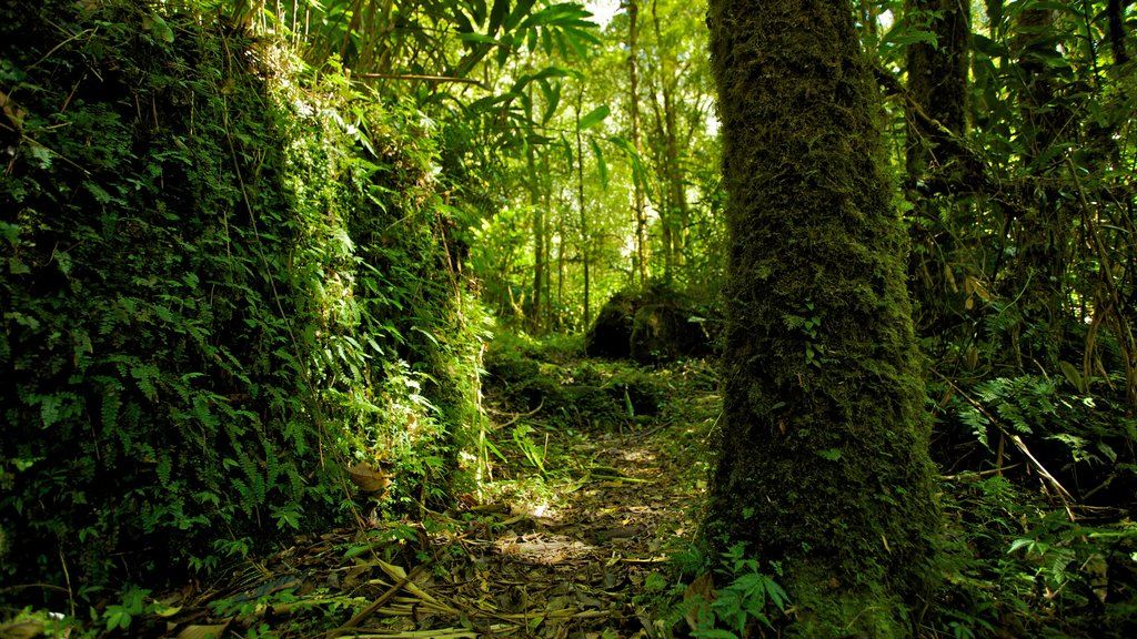 Kinabalu National Park showing forest scenes