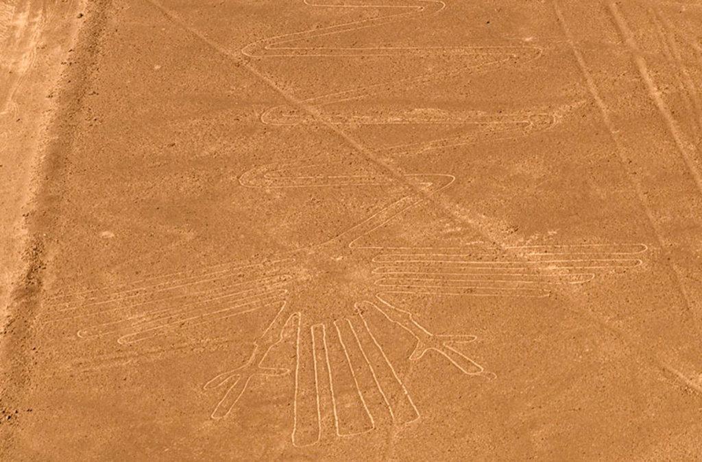 Il pellicano, figura emblematica tra le linee di Nazca. By Marcito (Own work)  , via Wikimedia Commons