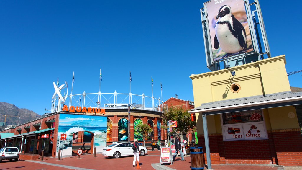 Victoria and Alfred Waterfront featuring marine life
