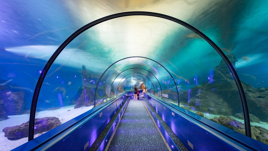 Antibes featuring marine life and interior views