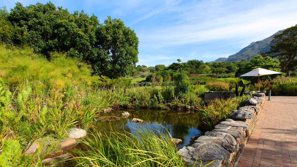 Kirstenbosch National Botanical Gardens which includes mountains, a pond and forest scenes