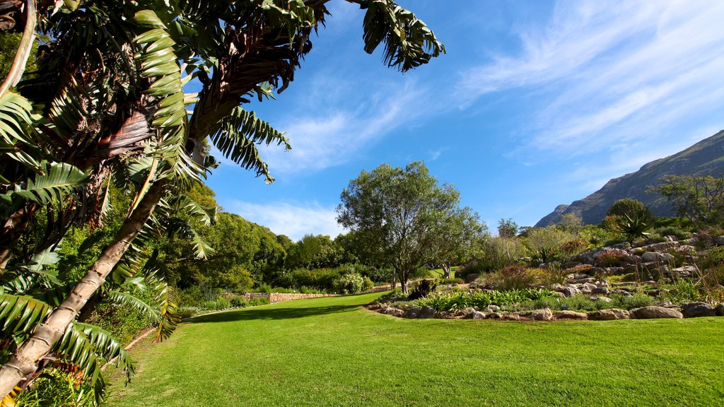 Kirstenbosch National Botanical Gardens which includes a park and landscape views