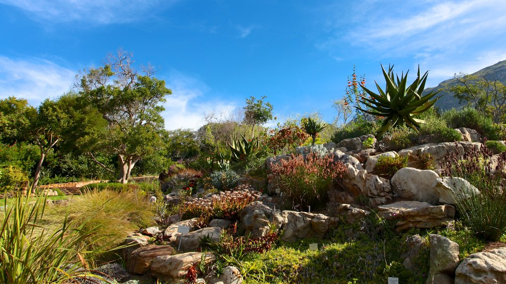 Kirstenbosch National Botanical Gardens which includes landscape views and a park
