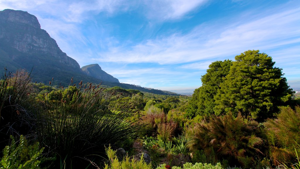 Kirstenbosch National Botanical Gardens showing landscape views and mountains