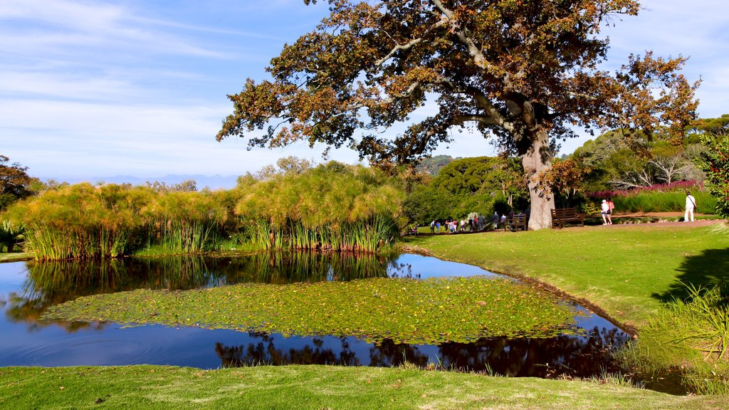 Kirstenbosch National Botanical Gardens which includes a lake or waterhole, a pond and a garden