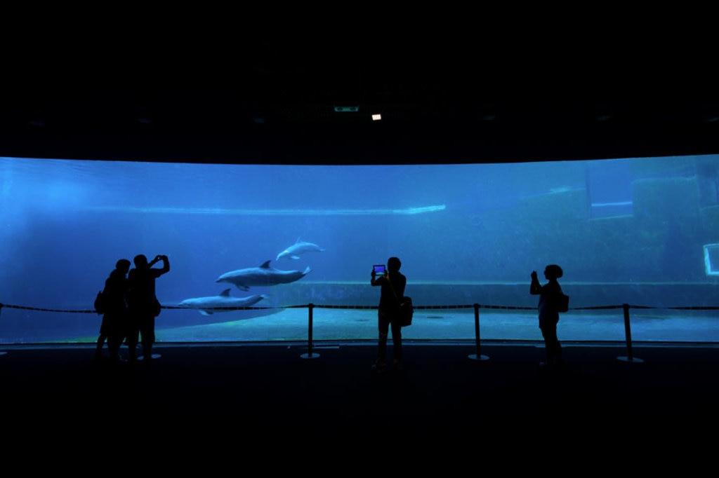 Acquario di Genova. Courtesy of © acquariodigenova.it  La struttura dell'Acquario di Genova è tra le più grandi d'Europa e ospita di più 15mila specie di animali tra uccelli, peschi, squali e cetacei.