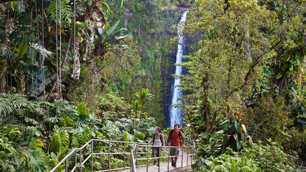 Akaka Falls showing hiking or walking, a waterfall and rainforest