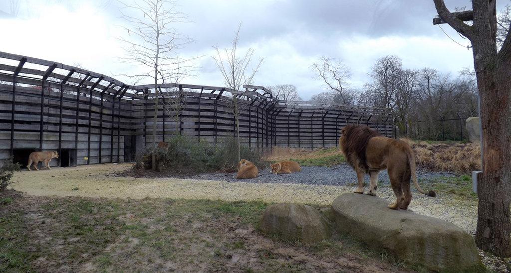 L'area dedicata ai leoni al Parc Zoologique del Bois de Vincennes By Léodras (Own work)  , via Wikimedia Commons