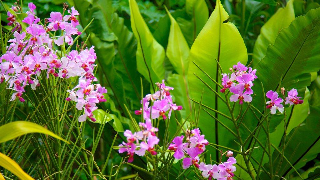 Jardín nacional de la orquídea mostrando flores y flores silvestres