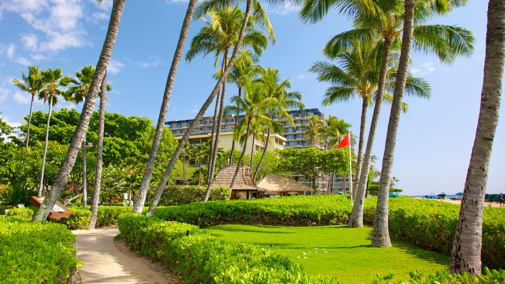 Kaanapali Beach featuring tropical scenes