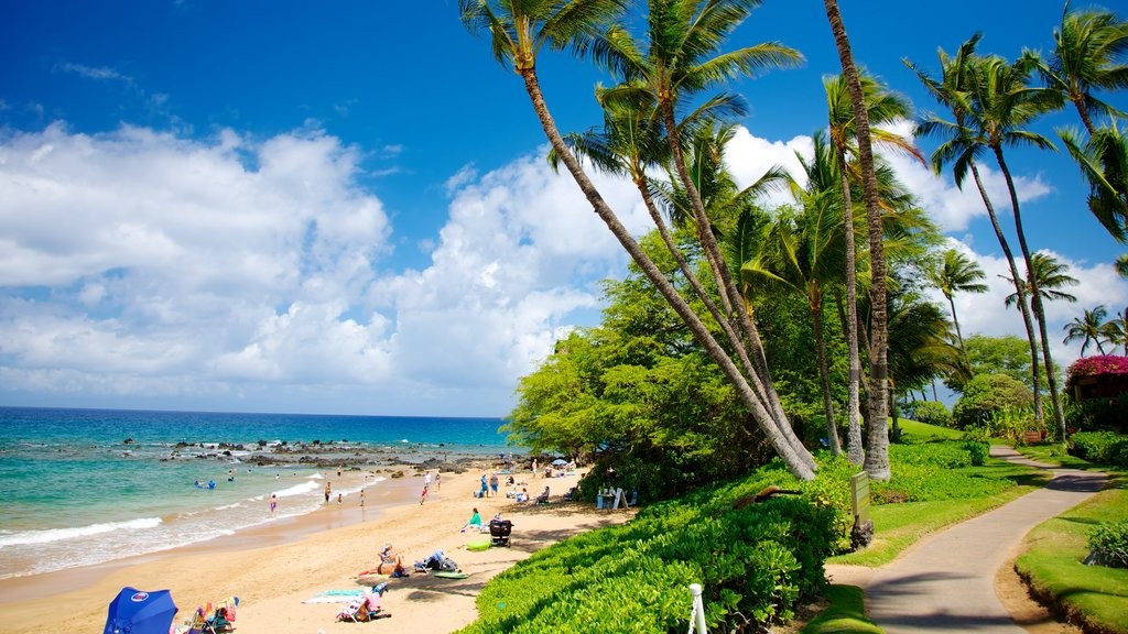 Wailea Beach showing tropical scenes, swimming and a sandy beach