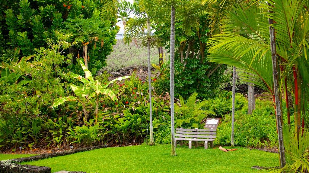 Sadie Seymour Botanical Garden featuring a garden