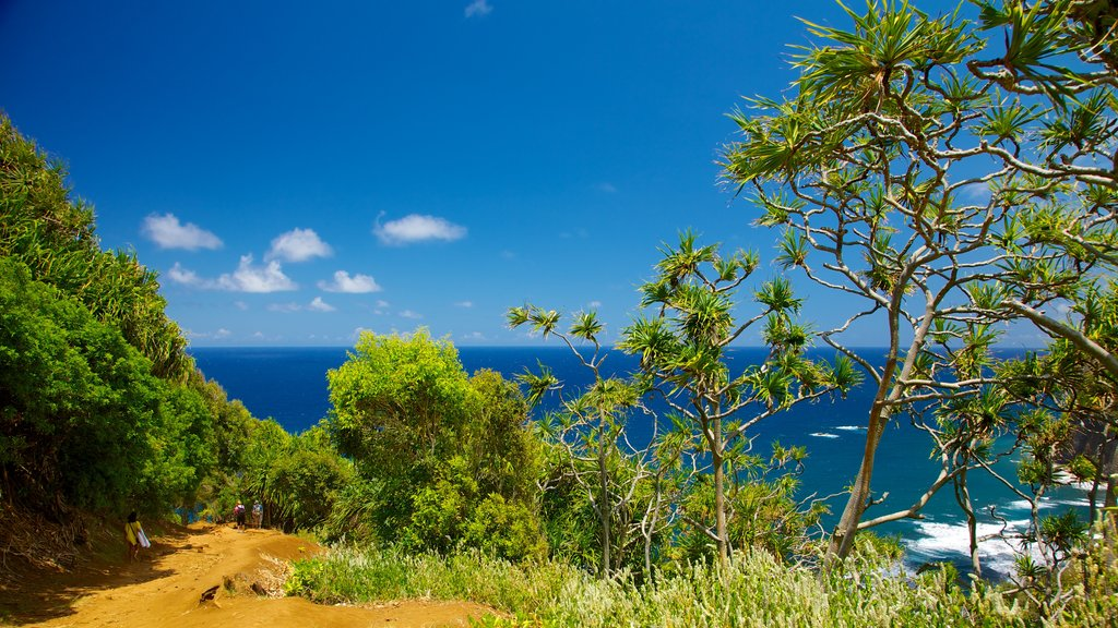 Pololu Valley Overlook featuring general coastal views and landscape views