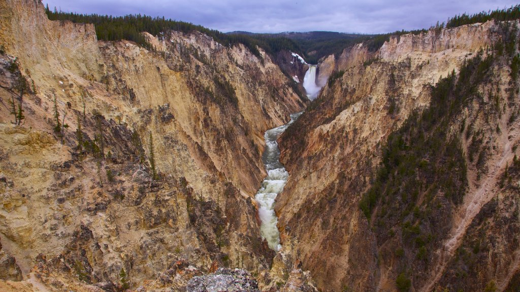 Yellowstone National Park which includes a cascade, a gorge or canyon and landscape views