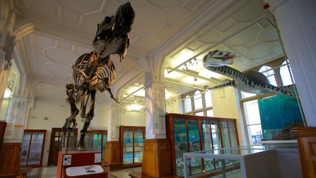 Manchester Museum featuring interior views