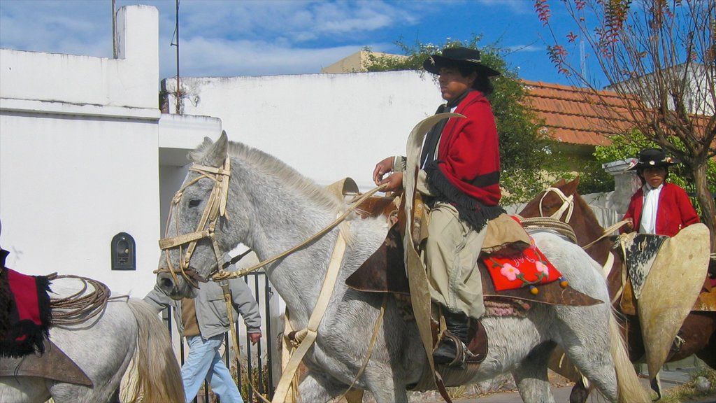 Salta featuring land animals and horseriding