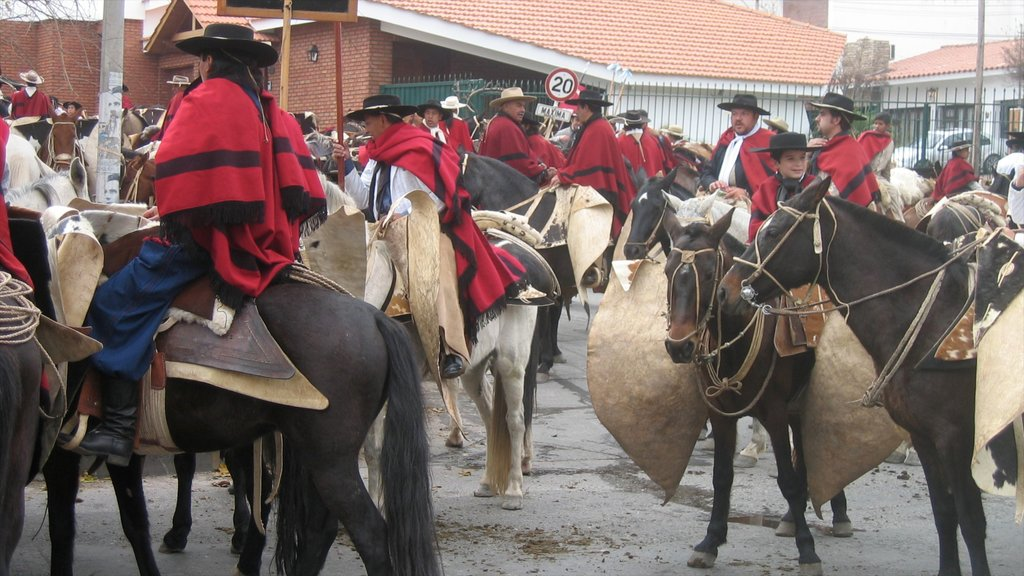 Salta showing street scenes, horseriding and land animals