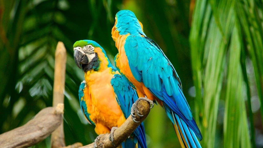 Jurong Bird Park featuring zoo animals and bird life