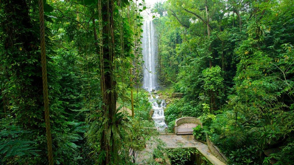 Jurong Bird Park ofreciendo escenas forestales, un parque y selva