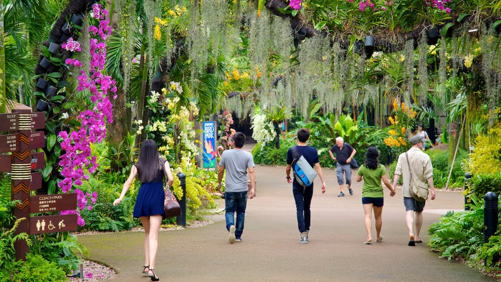 Jurong Bird Park que incluye un parque, flores y flores silvestres