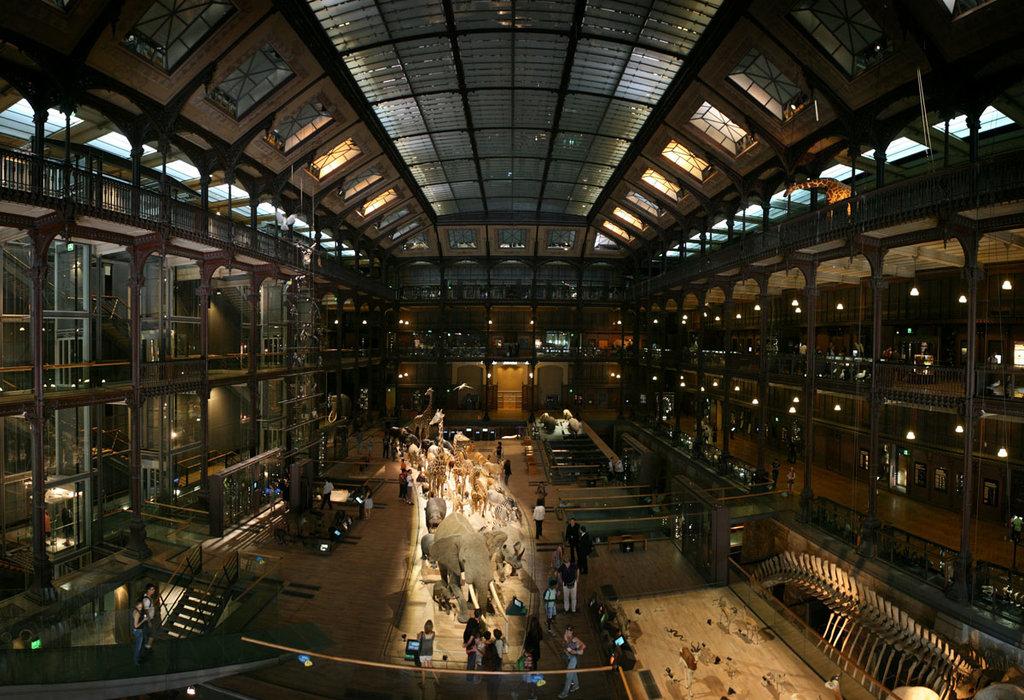 La grande galleria dell'evoluzione presso il Museo Nazionale di Storia Naturale di Parigi. By Roï Boshi (Own work)  , via Wikimedia Commons