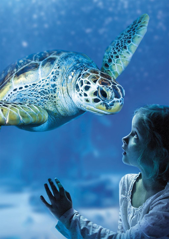Una piccola visitatrice osserva una tartaruga al Sea Life Aquarium. Courtesy of Sea Life Roma Aquarium
